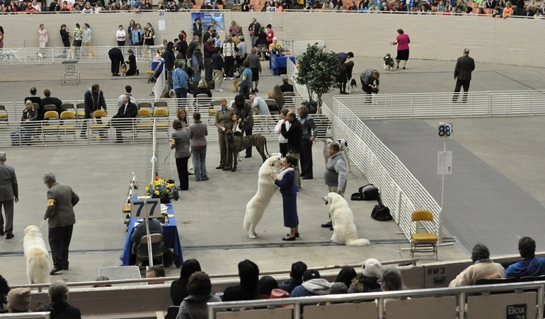 People watching as dogs compete at a dog show.