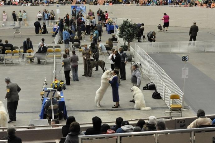 People watch as dogs compete at a dog show.