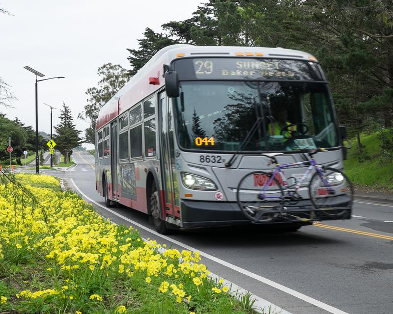 Muni hybrid bus passing bed of flowers in McLaren Park