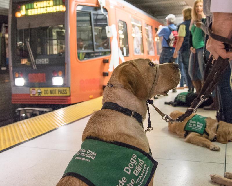 guide dog in Muni Metro station