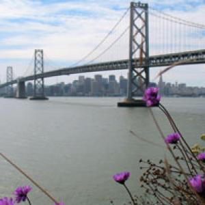 Image of flowers in front of the Bay Bridge