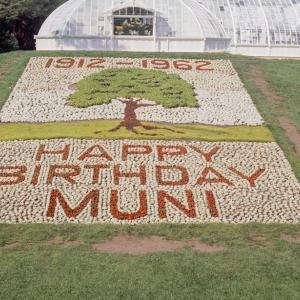 "bed of succulent plants spelling ""happy birthday muni"""
